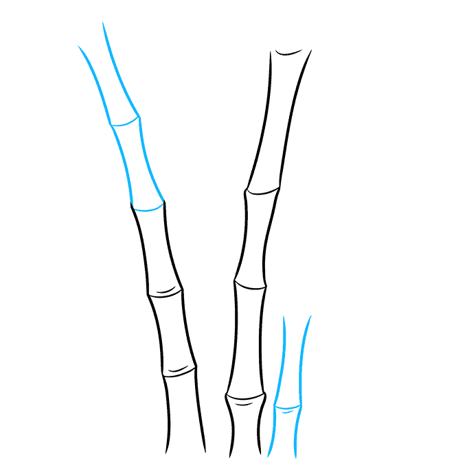 How to Draw Bamboo: Step 3