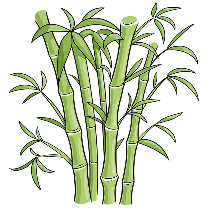 How to Draw Bamboo: Step 10