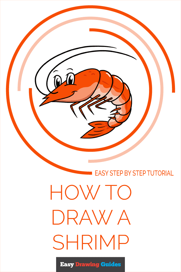 How to Draw a Shrimp Pinterest Image