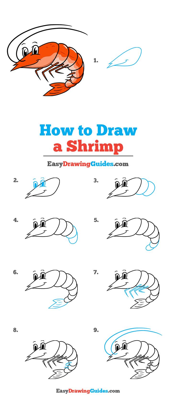 How to Draw a Shrimp Step by Step Tutorial Image
