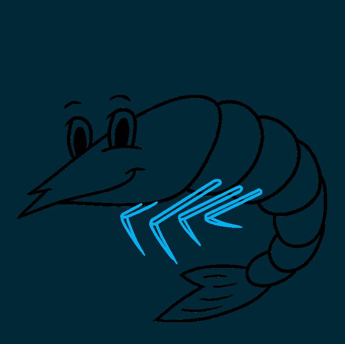 How to Draw a Shrimp Step 07