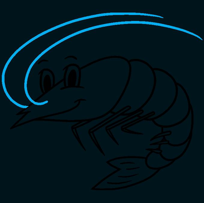 How to Draw a Shrimp Step 09