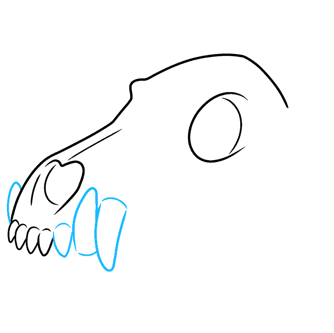 How to Draw Wolf Skull: Step 4