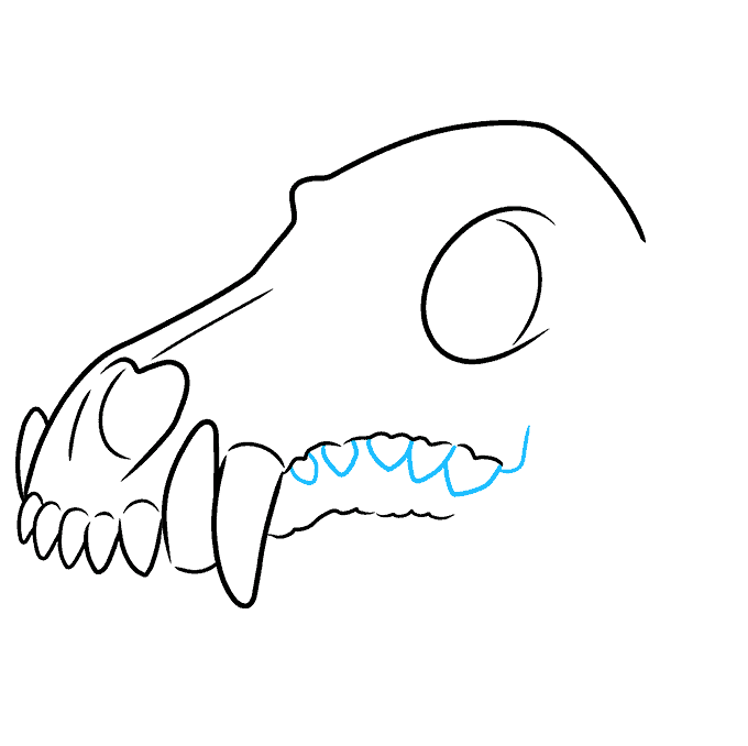 How to Draw Wolf Skull: Step 6