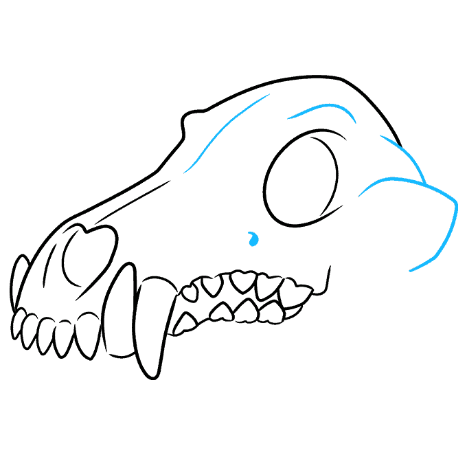 How to Draw Wolf Skull: Step 8