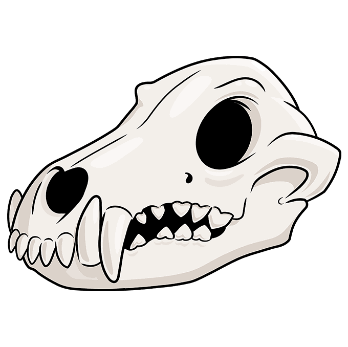 How to Draw Wolf Skull: Step 10