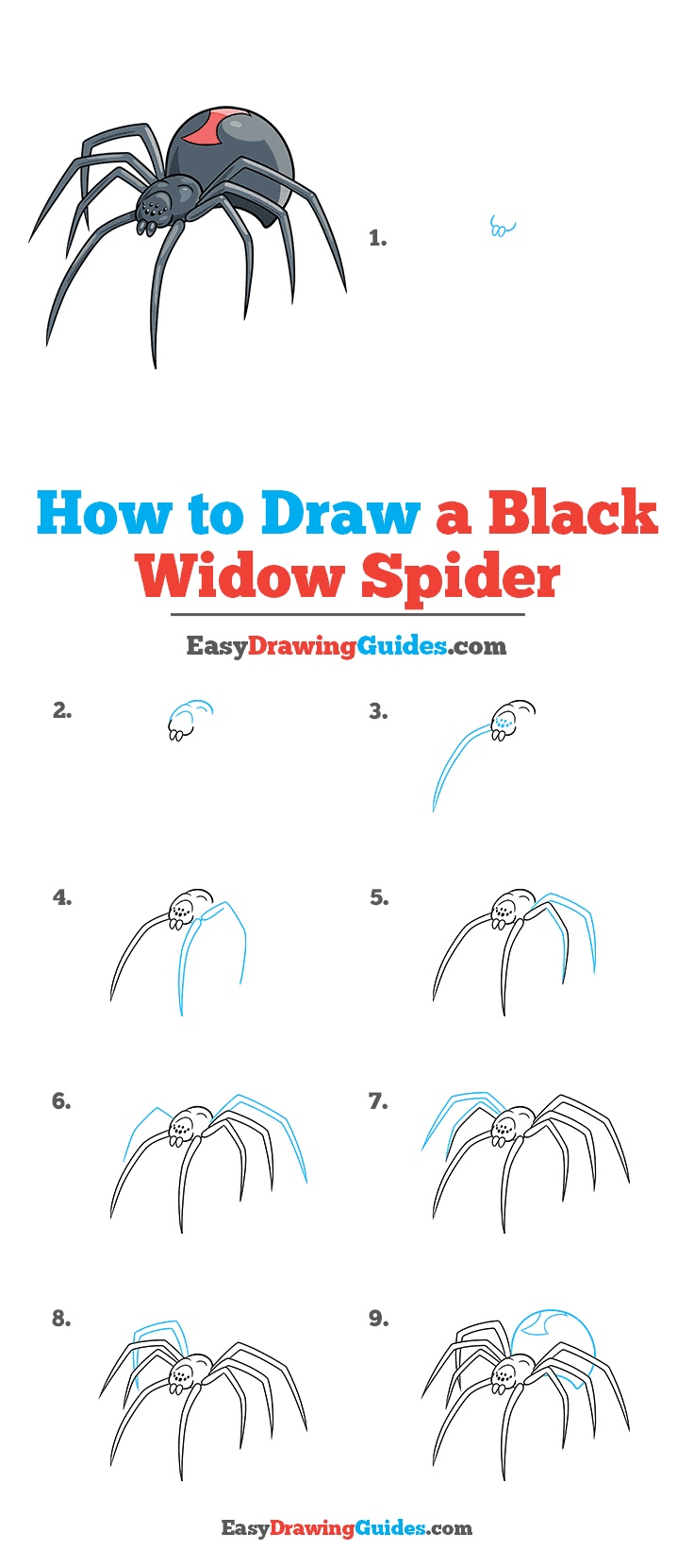 How to Draw a Black Widow Spider Step by Step Tutorial Image