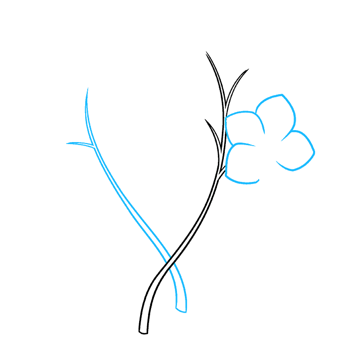 How to Draw Foget Me Not Flowers Step 02