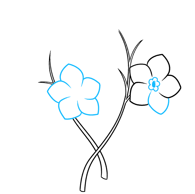 How to Draw Foget Me Not Flowers Step 03