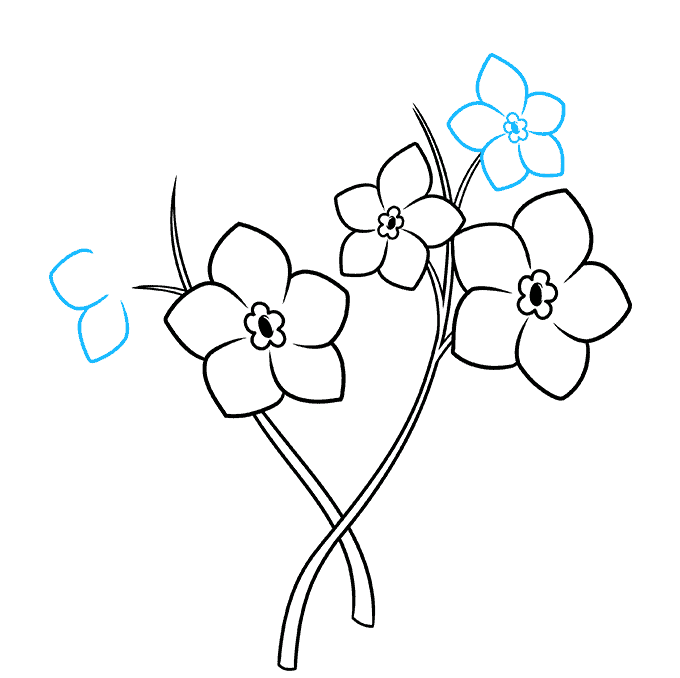 How to Draw Foget Me Not Flowers Step 05