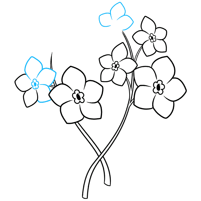 How to Draw Foget Me Not Flowers Step 06