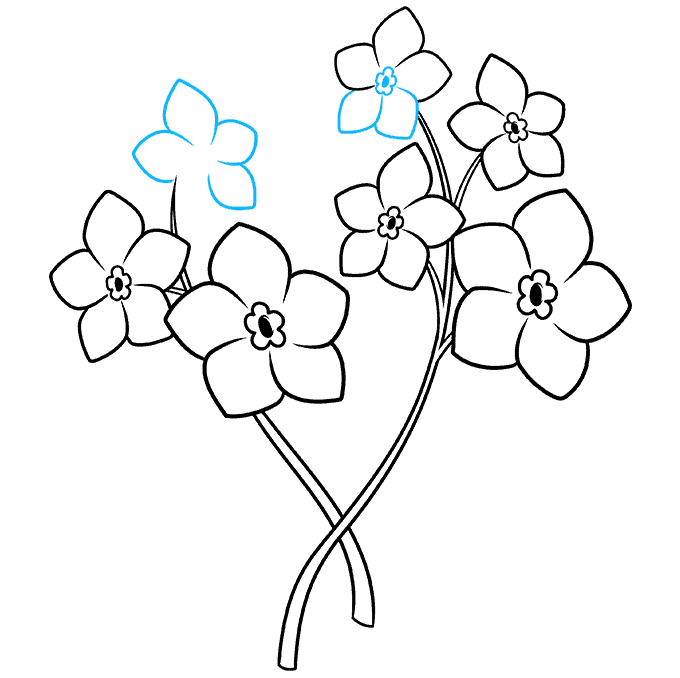 How to Draw Foget Me Not Flowers Step 07
