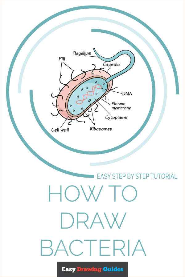 How to Draw Bacteria Pinterest Image