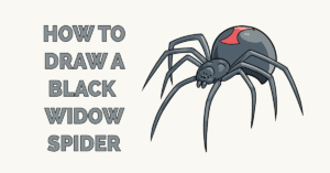 How to Draw a Black Widow Spider Featured Image