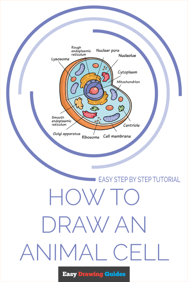 How to Draw an Animal Cell Pinterest Image