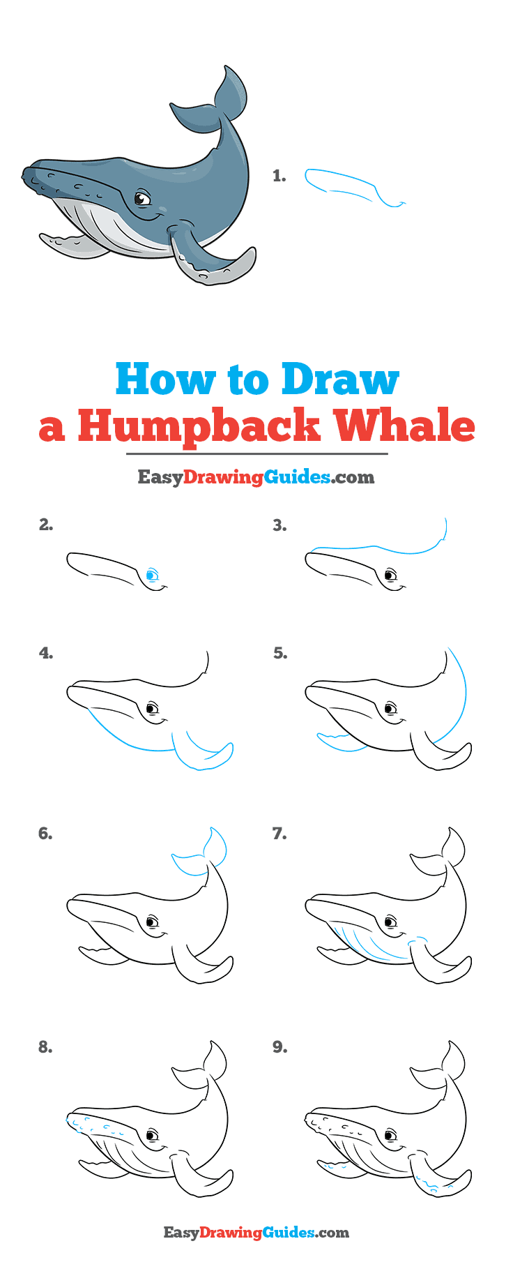 How to Draw a Humpback Whale Step by Step Tutorial Image