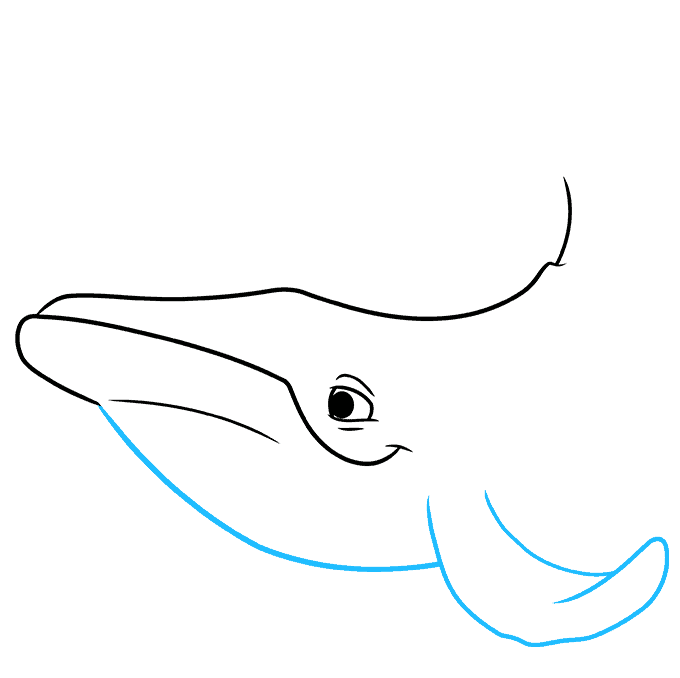 How to Draw a Humpback Whale Step 04