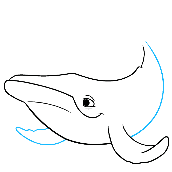 How to Draw a Humpback Whale Step 05