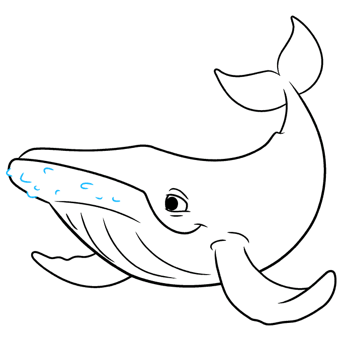 How to Draw a Humpback Whale Step 08