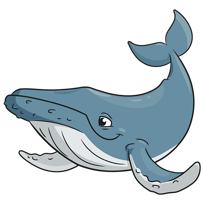 How to Draw a Humpback Whale Step 10
