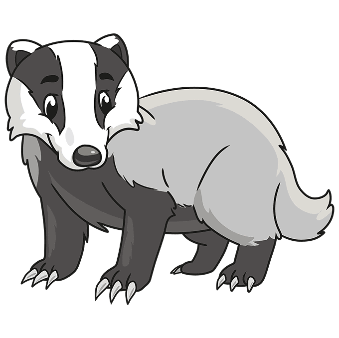 How to Draw a Badger Step 10