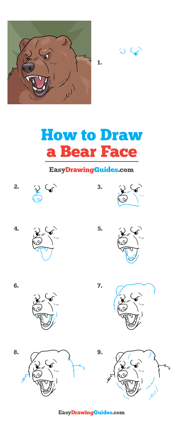 How to Draw a Bear Face Step by Step Tutorial Image