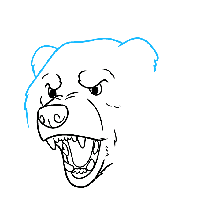 How to Draw a Bear Face Step 07