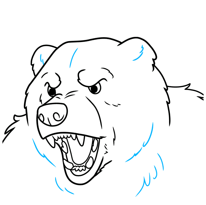 How to Draw a Bear Face Step 09