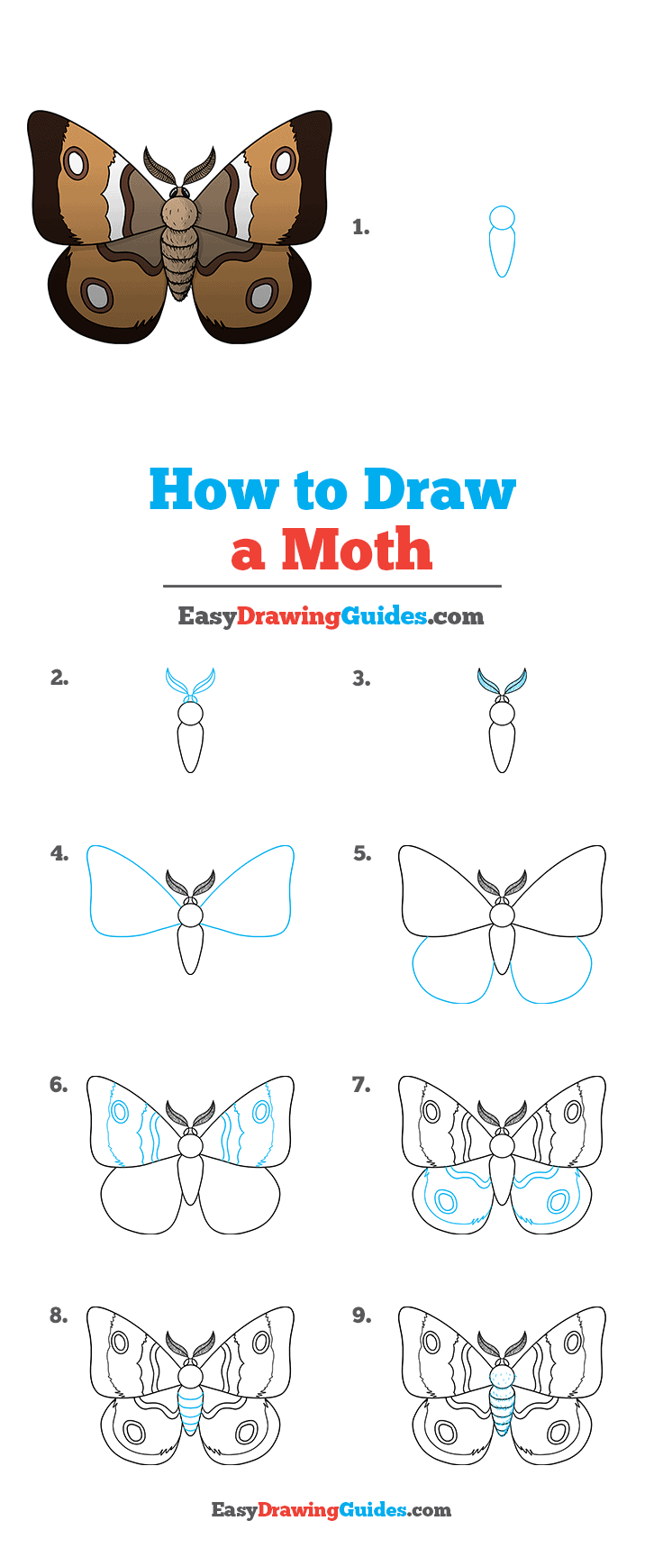 How to Draw a Moth Step by Step Tutorial Image