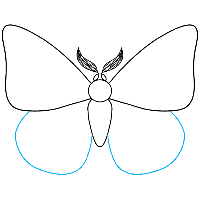How to Draw a Moth Step 05