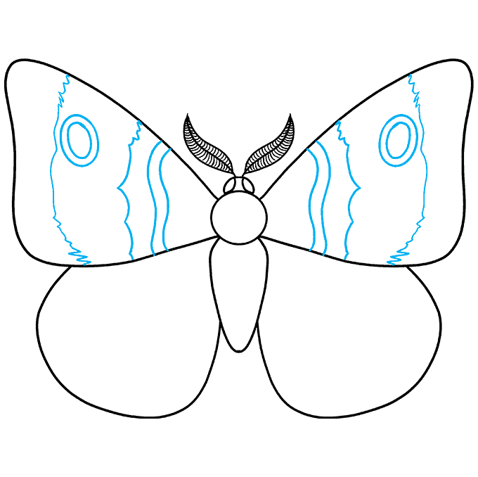 How to Draw a Moth Step 06
