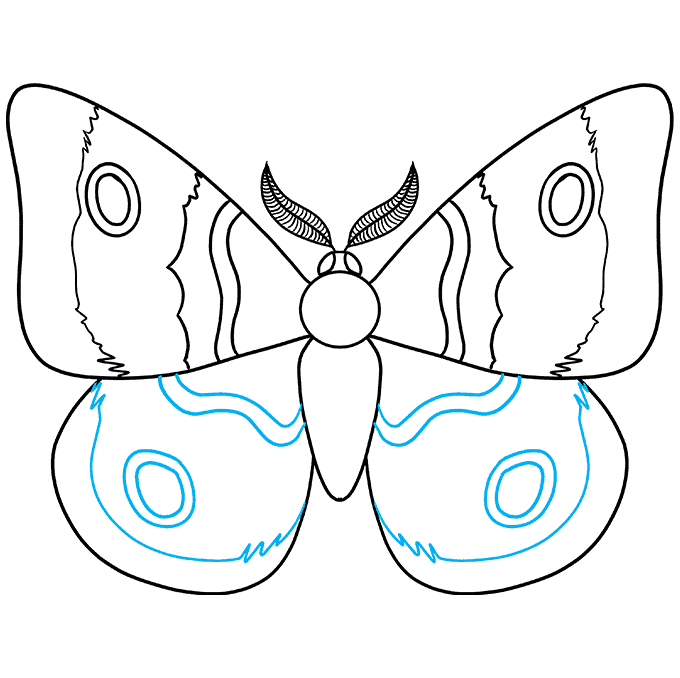 How to Draw a Moth Step 07