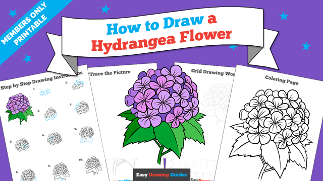 Printables thumbnail: How to Draw a Hydrangea Flower