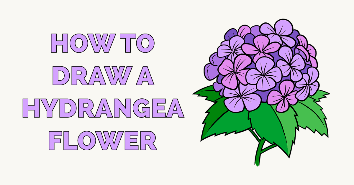 How to Draw a Hydrangea Flower Featured Image