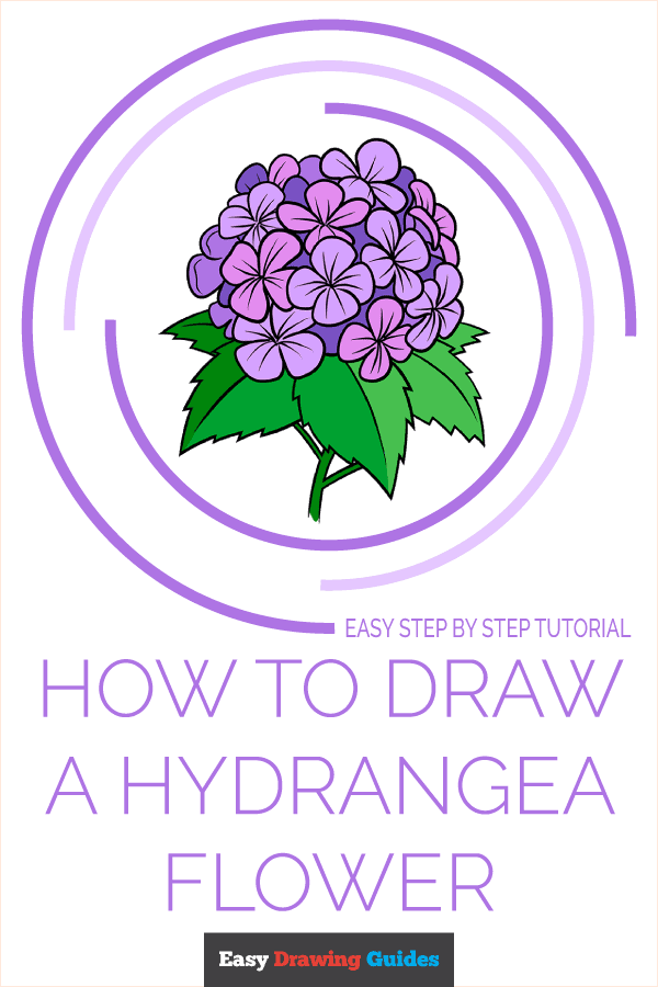 How to Draw a Hydrangea Flower Pinterest Image