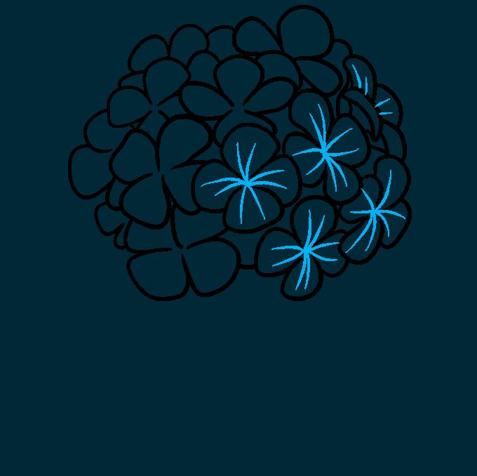 How to Draw a Hydrangea Flower Step 05