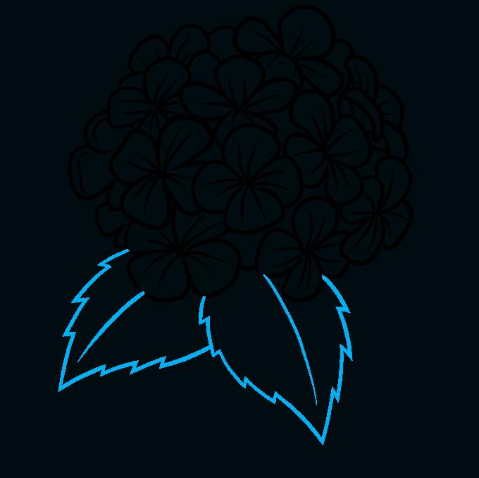 How to Draw a Hydrangea Flower Step 07