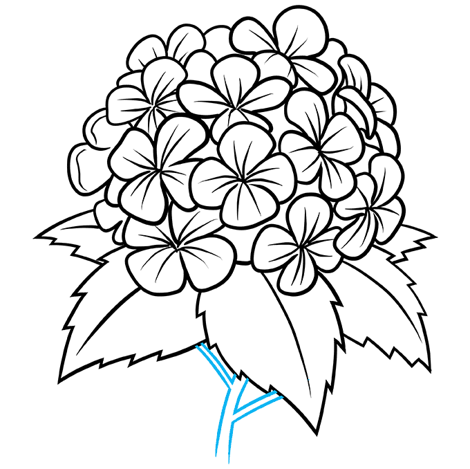 How to Draw a Hydrangea Flower Step 09