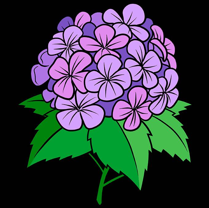 How to Draw a Hydrangea Flower Step 10