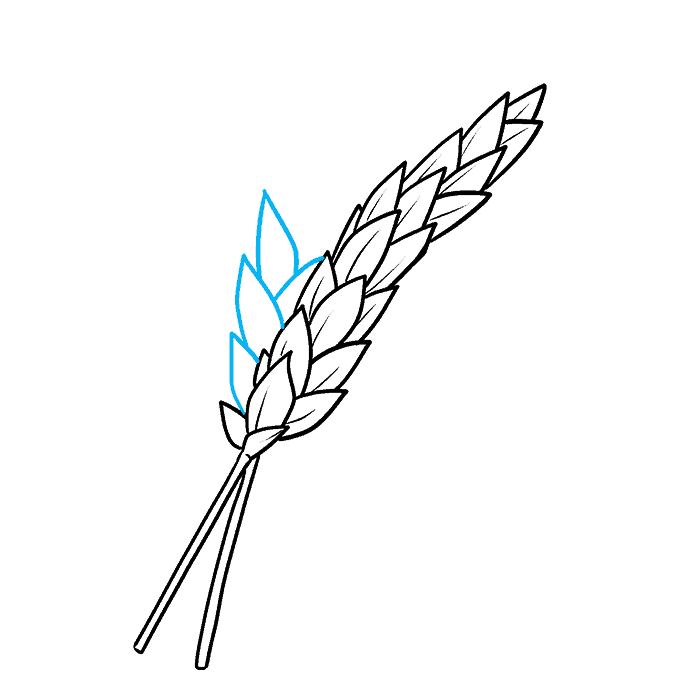 How to Draw Wheat Step 06