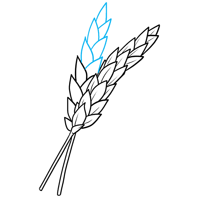 How to Draw Wheat Step 07