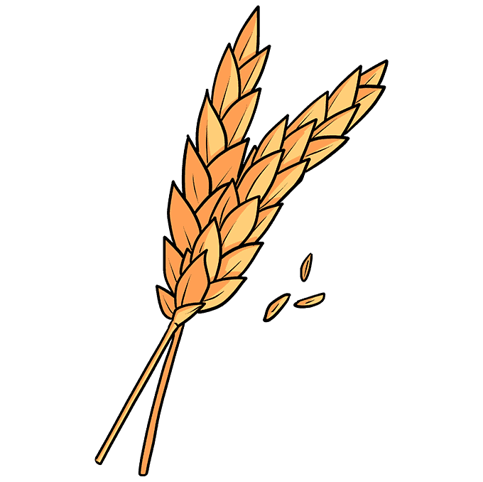 How to Draw Wheat Step 10