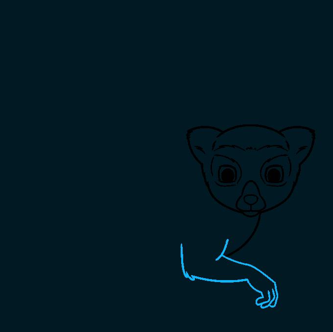 lemur step-by-step drawing tutorial: step 04