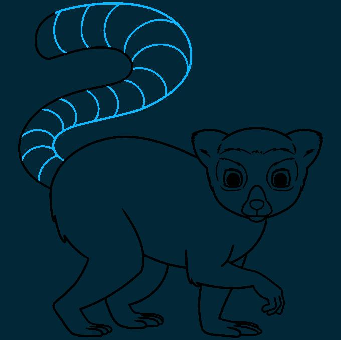 lemur step-by-step drawing tutorial: step 09