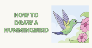 how to draw a humming bird featured image